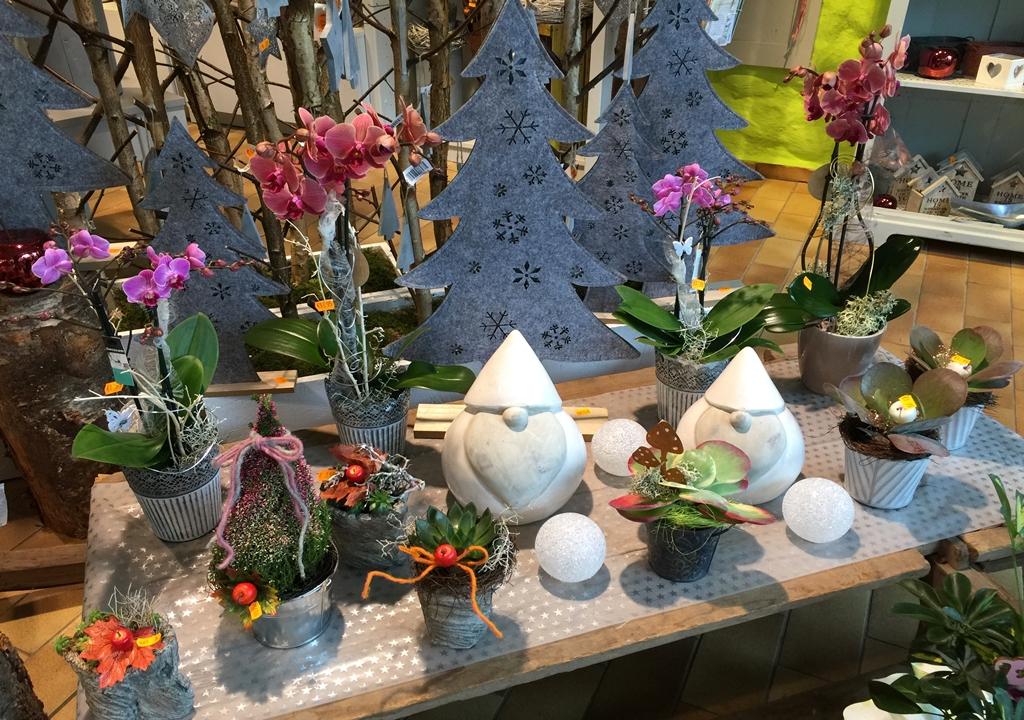 Weihnachten mit Orchideen